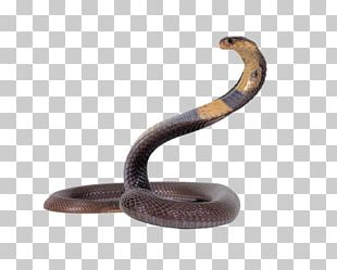 Snake Egyptian Cobra Reptile King Cobra PNG