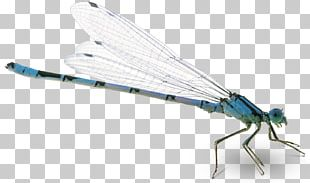 What Is An Insect? Flight Butterfly Bee PNG
