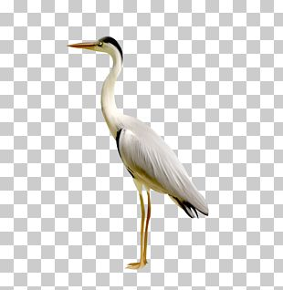 Plastic Toys Simulation Red-crowned Crane PNG