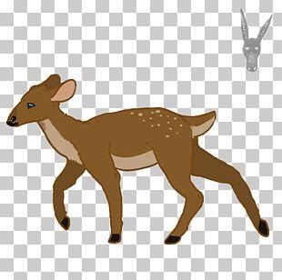 Red Fox Reindeer Moose Elk PNG