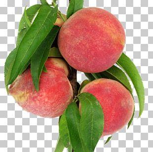 Nectarine Leaf Peach Food PNG