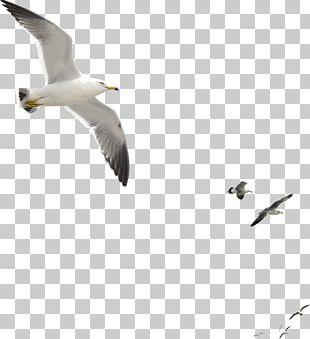 Gulls Bird Duck Goose Octopus PNG