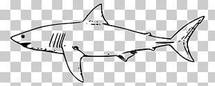 Great White Shark Hammerhead Shark Bull Shark PNG