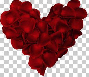 Valentine's Day Love Dwynwen Romance Dia Dos Namorados PNG