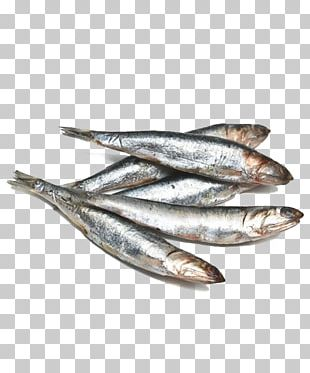 Anchovy Omelette Fish Sardine Basa PNG