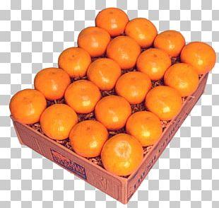 Tangerine Mandarin Orange Clementine Tangelo PNG