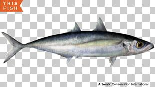 Sardine Thunnus Mackerel Scad Fish Products PNG