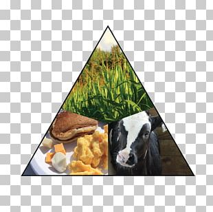 Cattle Goat Livestock Animal Snout PNG