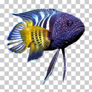 Hagfish Vertebrate Gill Coral Reef Fish PNG