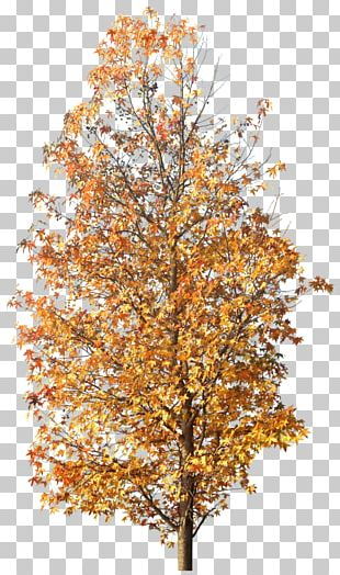 Twig Tree Autumn PNG