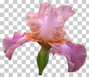 Irises Cut Flowers Computer Mouse Cattleya Orchids PNG