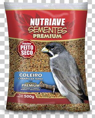 Atlantic Canary Passerine Bird Food Society Finch PNG