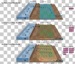 Sewage Treatment Waste Stabilization Pond Wastewater Biologinen Vedenpuhdistus Reed Bed PNG