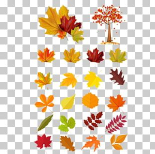 Leaf Euclidean Autumn Illustration PNG