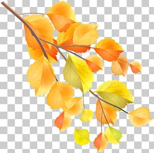 Autumn Branch PNG