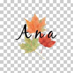 Autumn Leaf Color Watercolor Painting Maple Leaf PNG