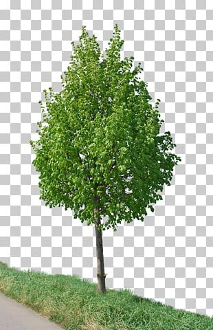 Tree Photography PNG