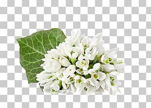 Flower Bouquet Tulip Desktop Snowdrop PNG