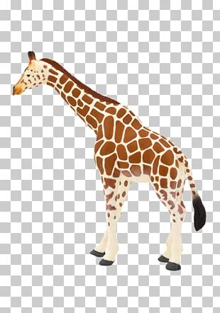Toy Northern Giraffe Lion Animal Leopard PNG