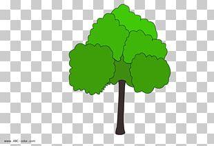 Drawing Tree Oak Raster Graphics Coloring Book PNG