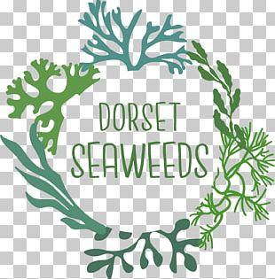 Plants Seaweed Plant Stem Leaf Flowering Plant PNG