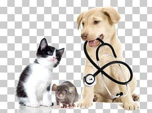 Veterinarian Veterinary Medicine Pet Clinique Vxe9txe9rinaire PNG