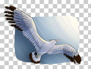 Bird Of Prey Beak Feather Eagle PNG