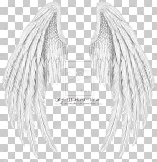 Drawing Cherub Angel Wing PNG