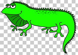 Lizard Green Iguana PNG