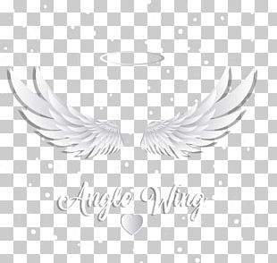 Wing Feather Icon PNG