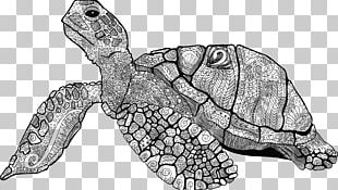 Sea Turtle Drawing Line Art Turtle Shell PNG