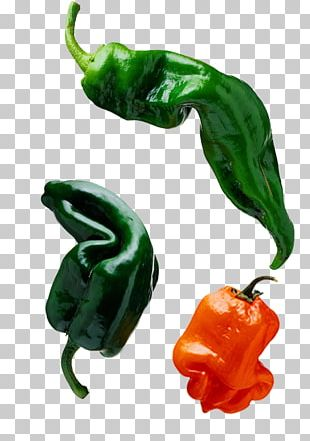 Bell Pepper Chili Pepper Capsaicin Pimiento PNG