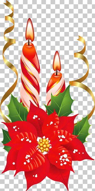 Poinsettia Christmas Flower PNG