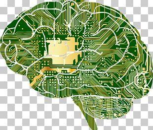 Neuroscience Brain Neurology Artificial Intelligence Learning PNG