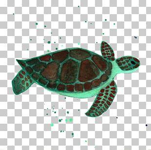 Loggerhead Sea Turtle Reptile Marine Biology PNG