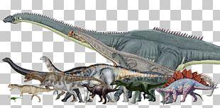 Dinosaur Size Morrison Formation Argentinosaurus Stegosaurus Allosaurus PNG