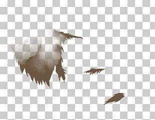 Water Bird Crane Eagle Beak PNG