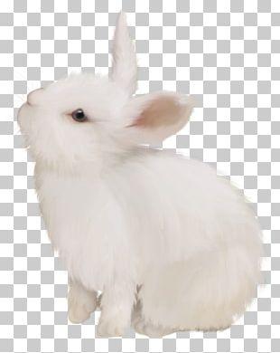 Domestic Rabbit White Rabbit Easter Bunny European Rabbit PNG