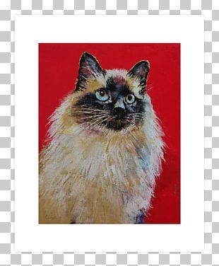 Birman Balinese Cat Whiskers Kitten Siamese Cat PNG
