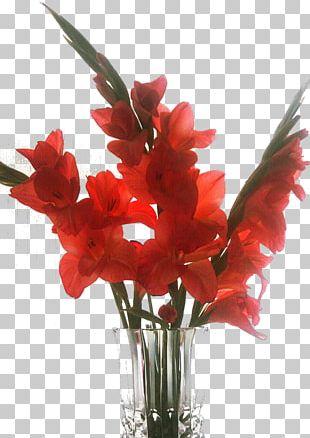 Gladiolus Vase Floral Design Cut Flowers Flower Bouquet PNG