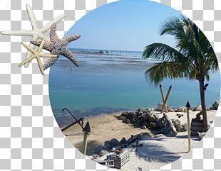 Lazy Days Restaurant Florida Keys Islamorada Seafood PNG