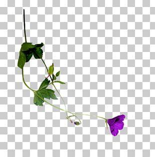 Leaf Plant Stem Petal Time Flowering Plant PNG