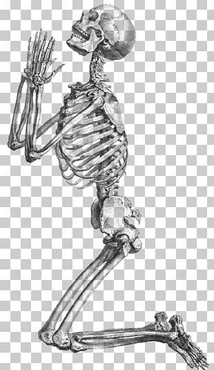 Prayer Human Skeleton Anatomy PNG