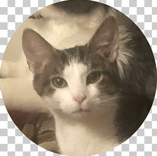 Whiskers Norwegian Forest Cat Aegean Cat Domestic Short-haired Cat Otter PNG