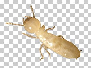 Eastern Subterranean Termite Ant Pest Control PNG