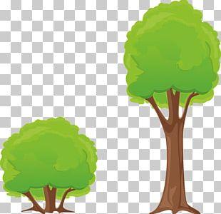 Shrub Tree PNG