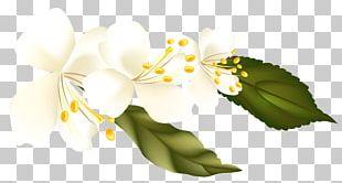 Flower Arranging Branch Computer Wallpaper PNG