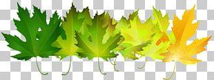 Autumn Leaf Color Green PNG