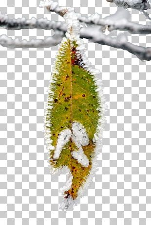 Butterfly Twig Christmas Ornament Leaf PNG