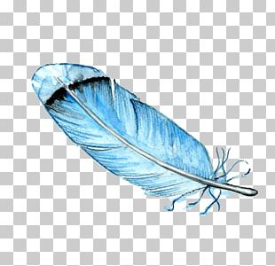Feather Bird Watercolor Painting Drawing PNG